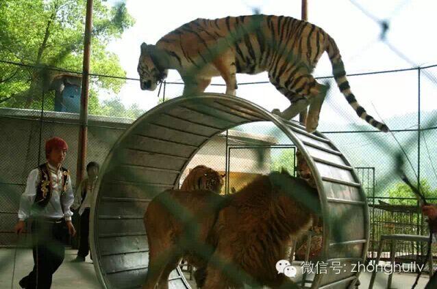 石燕湖动物表演